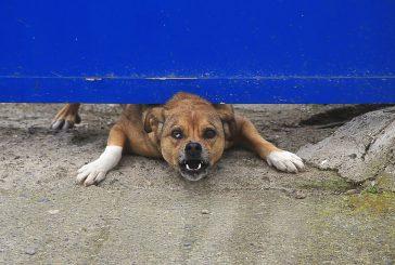 Težaven pes ali pes s težavami?