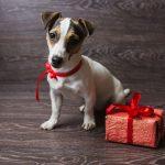 Darila za pse in njihove skrbnike: 5 uporabnih idej
