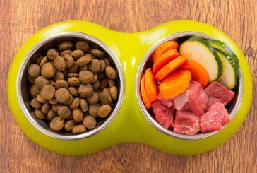 Prednosti hranjenja psa s svežo hrano