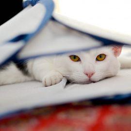 Zdravstvenih težav mačk ne smemo podcenjevati