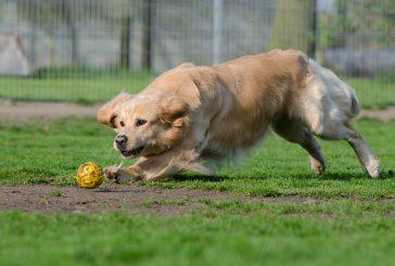 """Je fizična aktivnost res edina pot do """"srečnega in utrujenega psa""""?"""