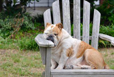 Kako shujšati psa?