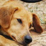 Epilepsija pri psih in tradicionalna kitajska veterinarska medicina