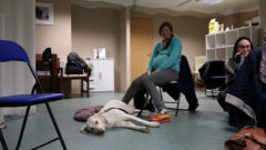 Špela Suhač, veterinarka in energijska osteopatinja se je delavnice udeležila kot obiskovalka skupaj z njeno Pepo.