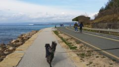 Kam na sprehod s psom