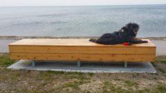 Sprehod in izlet s psom ob morju