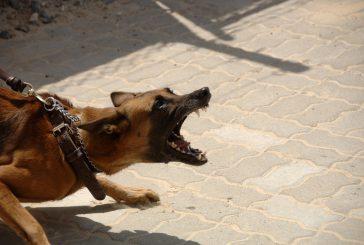 DELAVNICA: Življenje z reaktivnim psom