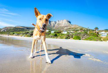 Izbor letošnjega poletja: 5 stvari, ki jih bo vaš pes oboževal