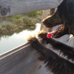 Škocjanski zatok: doživljajski sprehod s psom