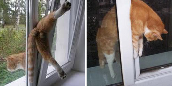 mačke nagibna okna tilting zaščitna mreža za okna za mačke