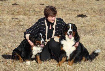 Cikel brezplačnih predavanj o psih