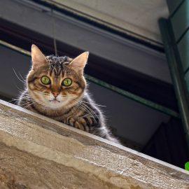 Nevarnost: mačke in okna, odprta na nagib