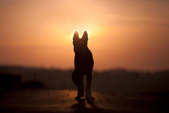 Smrt psa – kako preboleti izgubo psa?