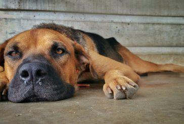 Starost in težave s hrbtenico pri psih
