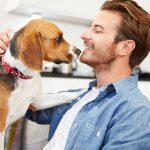 Plonk listek za moške – surova hrana za pse