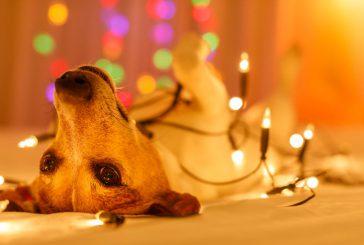 Najlepša darila za pse in njihove skrbnike