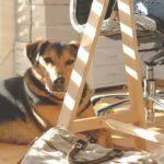 Psi na delovnem mestu v teoriji in praksi