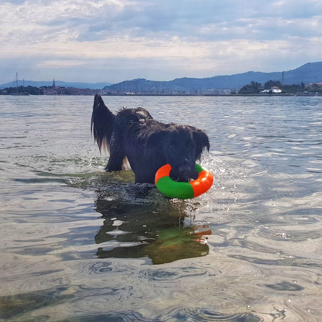 plavajoče igrače za pse