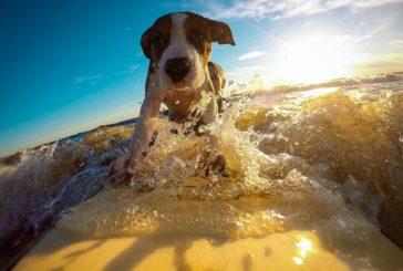 4 ideje za poletno razvajanje psa