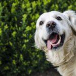Glavno merilo: dobre sestavine in zadovoljni psi!