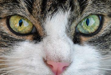 Katero hrano za mačke izbrati?