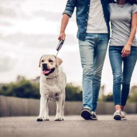 5 stvari, ki se ti lahko zgodijo samo na zmenku z veterinarjem