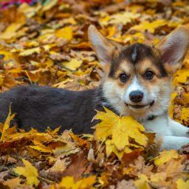 Jagodni izbor za lepšo jesen (in zimo)