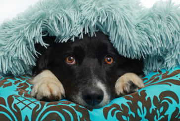 Petarde: 3 načini za pomiritev psa