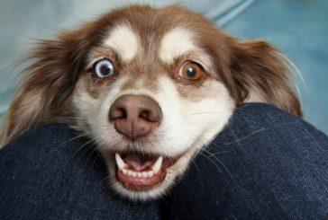 Drobovina za psa: kaj DA in kaj NE?