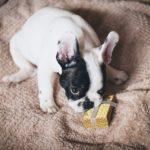 Kako za valentinovo pockrljati pse (in njihove skrbnice)?