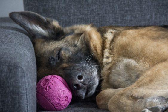 koronavirus kako zaposliti sebe in psa