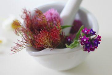 Homeopatija za živali: kako deluje?