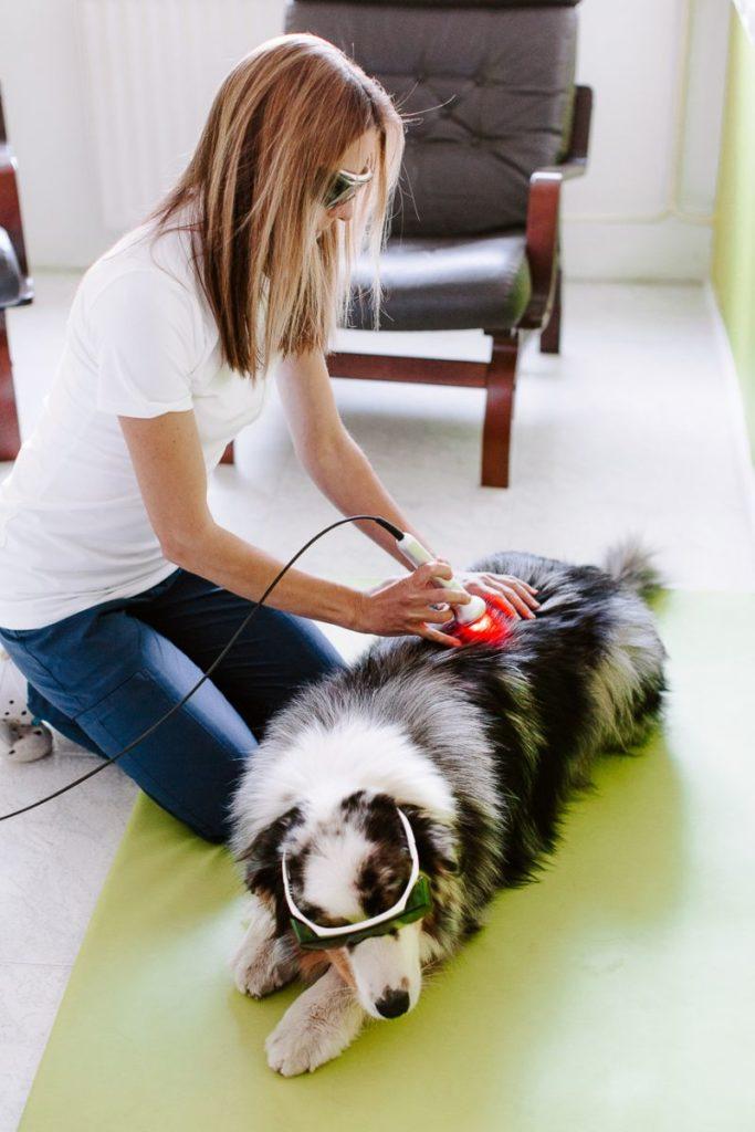 Laser za živali: protibolečinsko delovanje