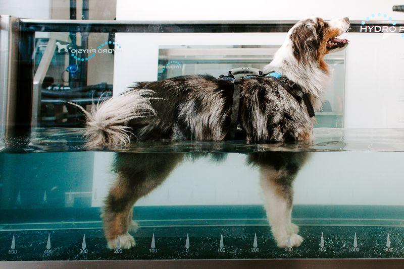terapija za pse v vodi - center hepifit