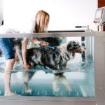 """Hidroterapija za pse: """"V rehabilitacijo jo vključujemo prepozno!"""""""