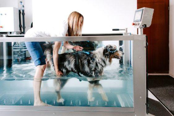 hidroterapija za pse - hepifit