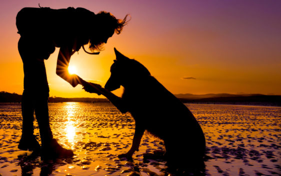 naturavetal pasja potovalka