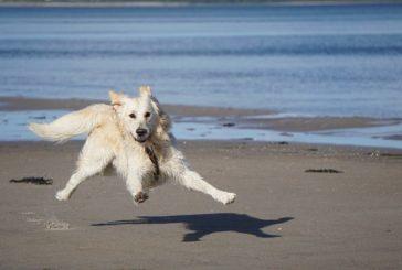 5 stvari, ki jih moraš imeti v poletni pasji potovalki