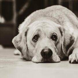 Skrb za bolnega psa lahko vpliva na zdravje človeka