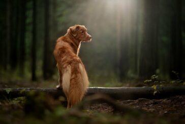 Sprehod s psom: doživetja namesto kilometrov